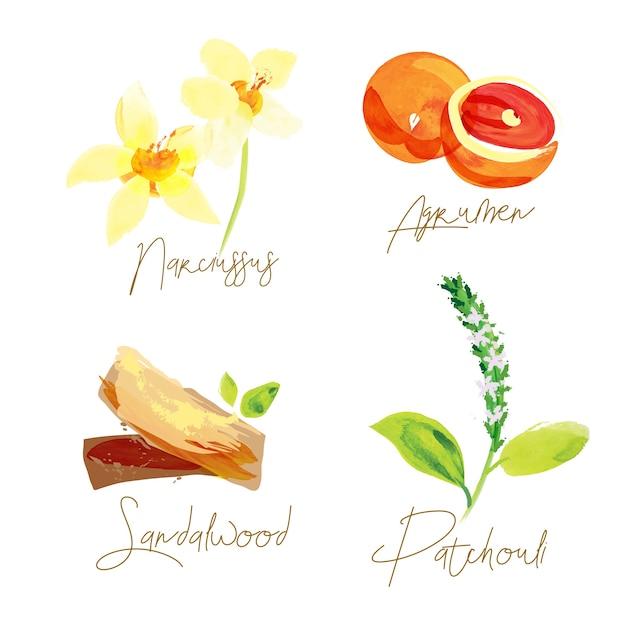 Perfume ingredients watercolor illustration Vector | Premium