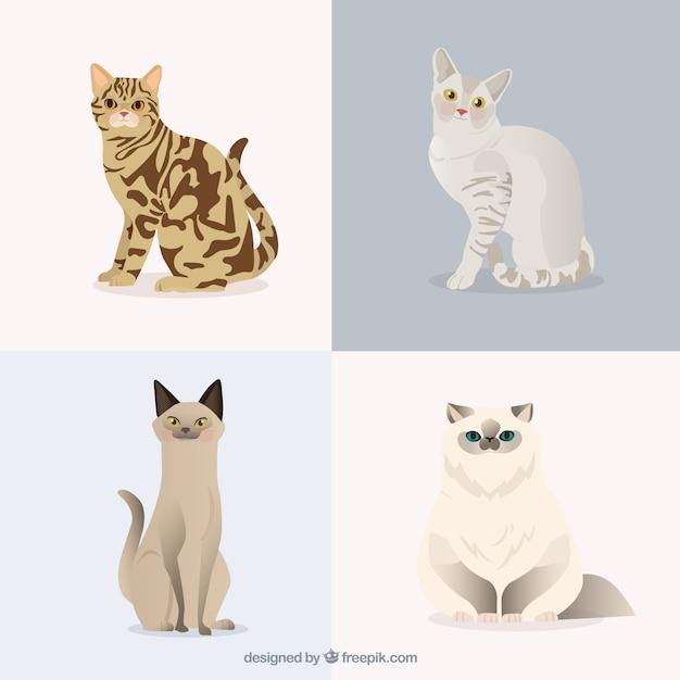 Pet cats pack