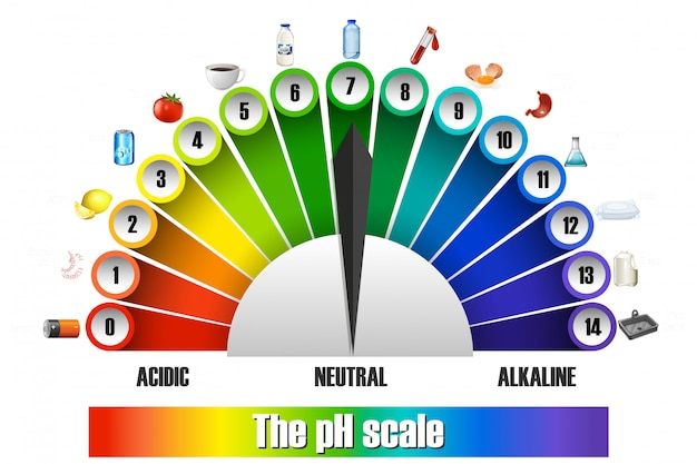 The ph scale on white background Free Vector