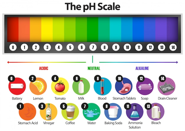 The ph scale on white Free Vector
