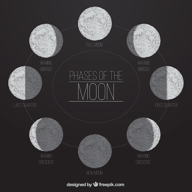 Phases of the moon in hand-drawn style Free Vector