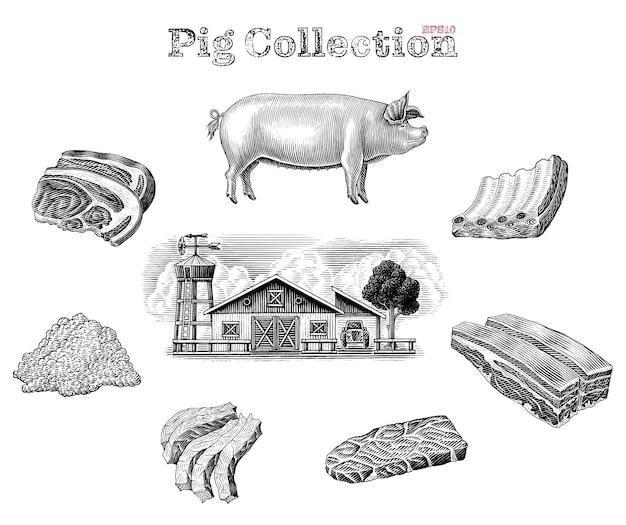 Elementi di maiale in bianco e nero impostati in stile incisione Vettore gratuito