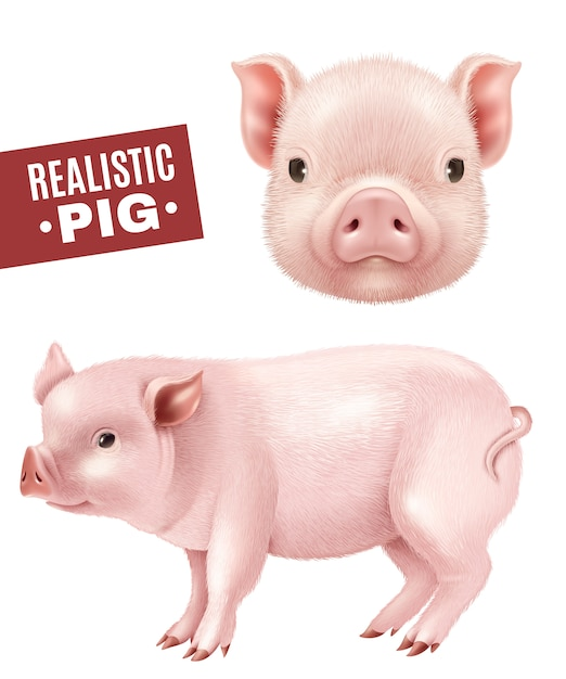 Pig realistic icons set Free Vector