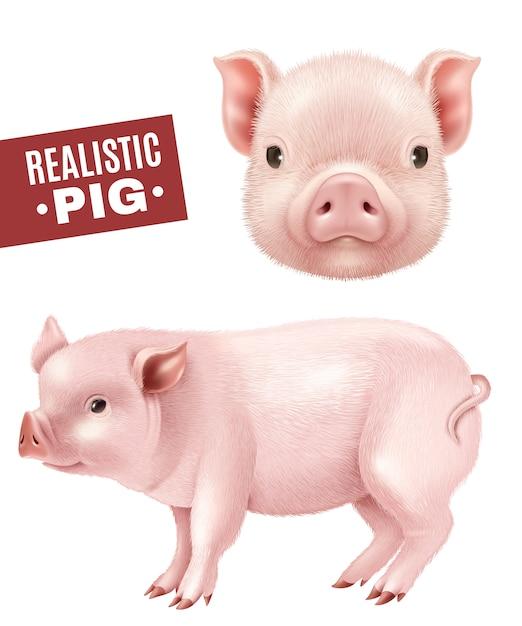 Свинья реалистичные иконки set Бесплатные векторы