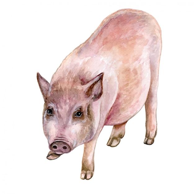 Piglet pig in watercolor Premium Vector