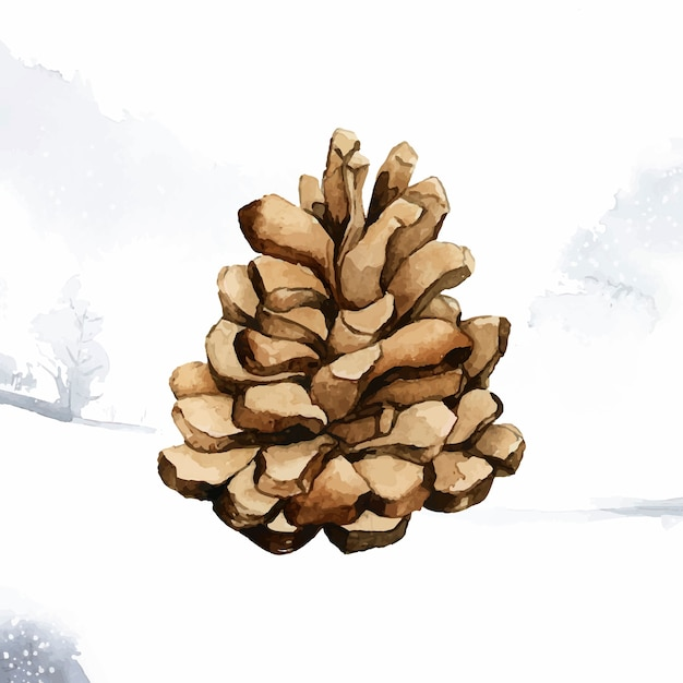Pine cone painted by watercolor vector Free Vector