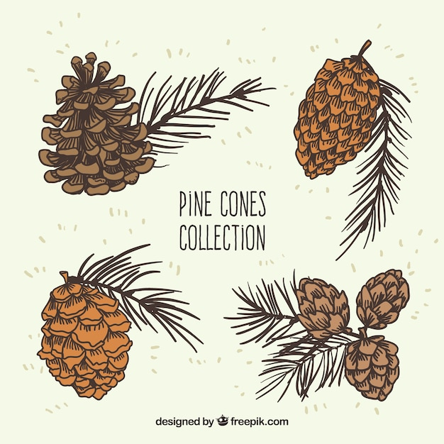 Pine Cone Illustration Pine cones illustratio...