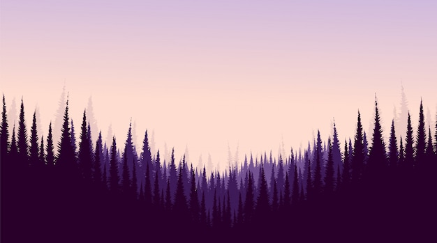 Pine forest, landscape background, sunshine and sunrise  . Premium Vector