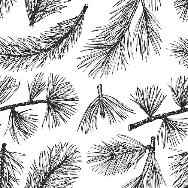Pine needles hand drawn seamless pattern. Premium Vector