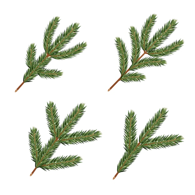 Pine tree branches. realistic xmas decoration elements. Premium Vector