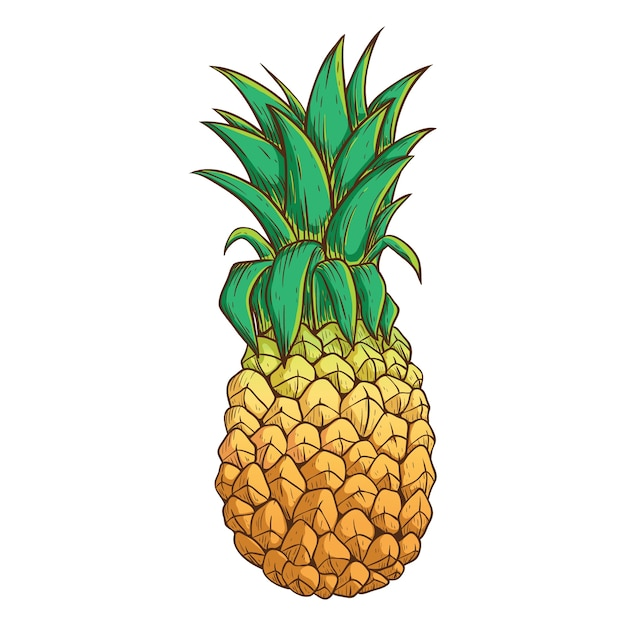 Pineapple With Color and Outline on White Background ...
