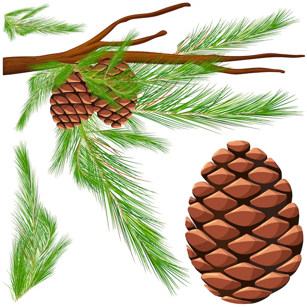 Pinecone on the branch Free Vector