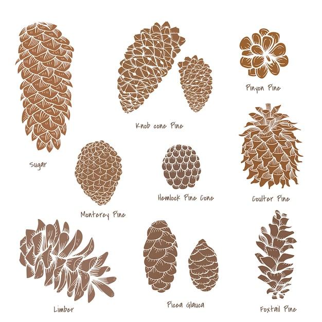 Коллекция pinecone Бесплатные векторы