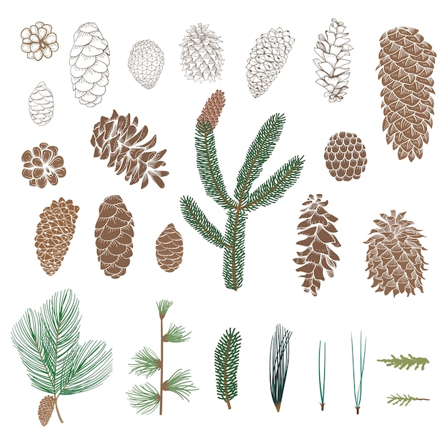 Pinecone collection Free Vector