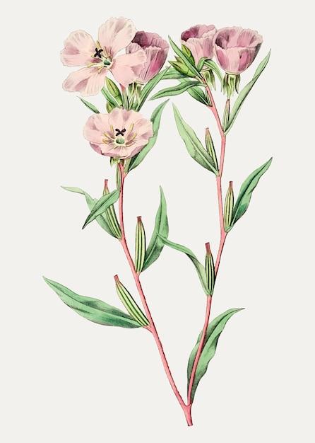 Pink amaryllis branch Free Vector