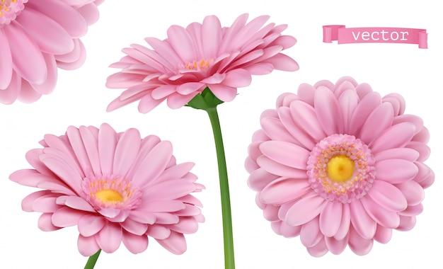 Pink dahlia. 3d chamomile flowers set Premium Vector