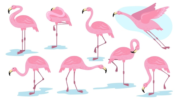 Pink flamingo bird in different poses flat set Free Vector