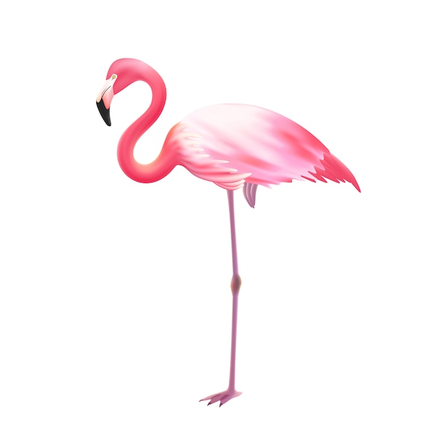 Pink flamingo one leg realistic Free Vector