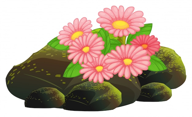 Pink flowers and rocks on white Free Vector