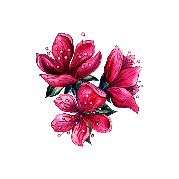 Pink flowers watercolor, japanese plum blossom Free Vector