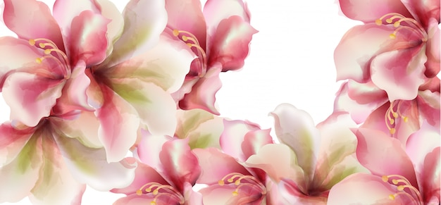 Pink lily flowers watercolor Premium Vector