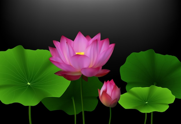 Pink lotus flower with green leaves on black background vector pink lotus flower with green leaves on black background premium vector mightylinksfo