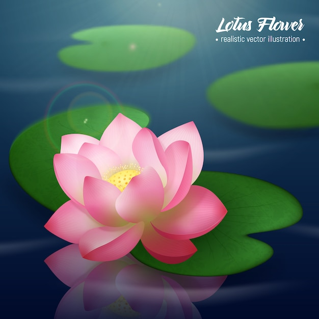 Pink lotus flower with two wide disc shaped leaves floating on water realistic illustration Free Vector
