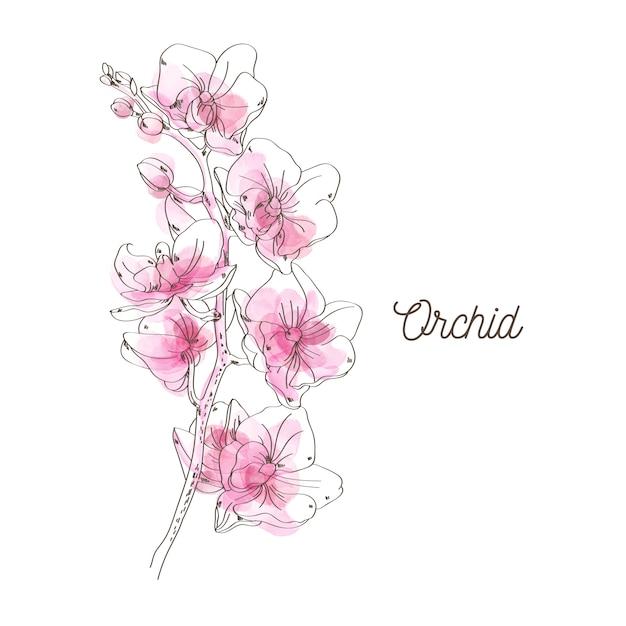 白地にピンクの蘭のイラスト Premiumベクター