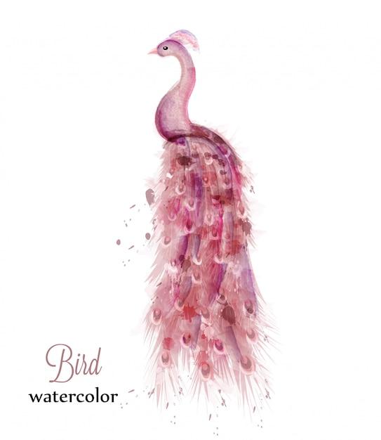 Pink peacock watercolor Premium Vector