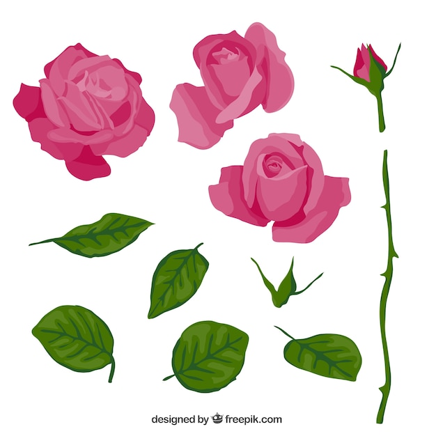 Pink rose in parts Free Vector