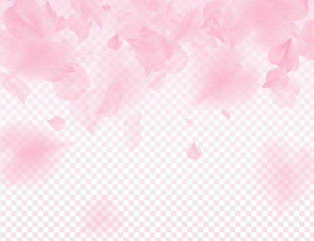 Розовые лепестки сакуры на прозрачном фоне. Premium векторы