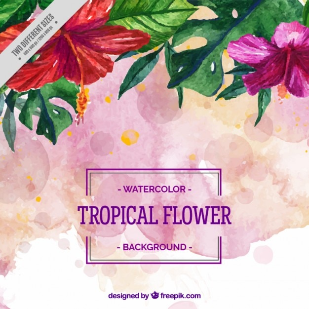 pink tropical flowers background vector  premium download, Natural flower