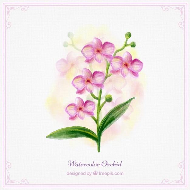 ピンクの水彩蘭 無料ベクター
