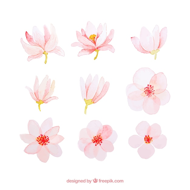 Pink watercolor spring flower collection