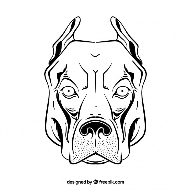 Pitbull head drawing icon vector Free Vector
