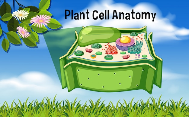 Plant Cell Anatomy Diagram Vector | Premium Download