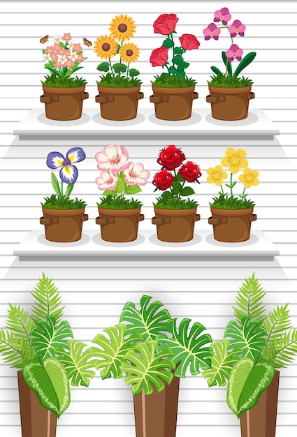 Plant on the shelves Free Vector