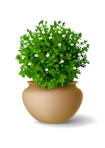 Plant with flowers in vase Premium Vector