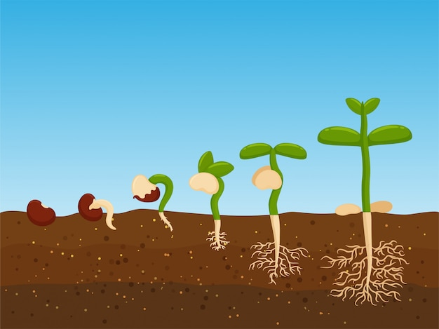 Planting trees from agricultural seeds Premium Vector