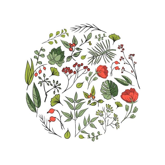 植物とハーブの背景。デザインや招待状の要素の要素 無料ベクター
