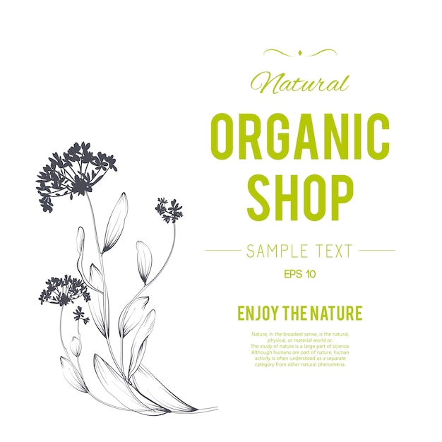 Plants and herbs background. element for design or invitation card Free Vector