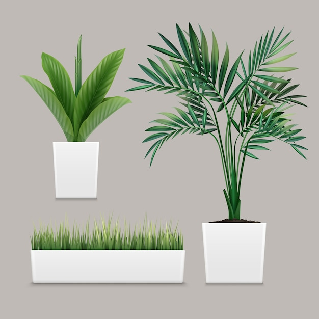 Piante in vaso in contenitori per uso interno come piante d'appartamento e decorazioni Vettore gratuito