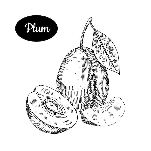 Plum hand drawn. Premium Vector