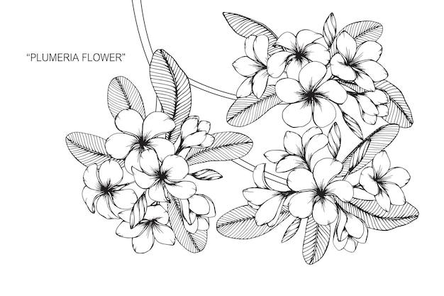 プルメリアの花を描くイラスト Premiumベクター