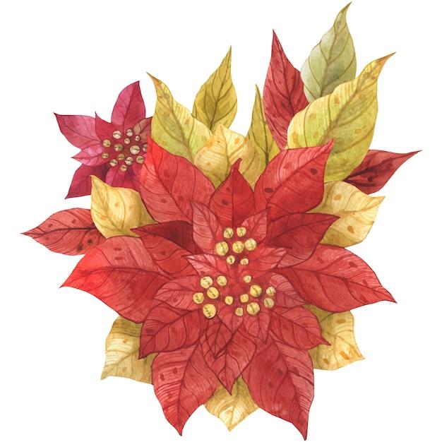 Poinsettia christmas bouquet Premium Vector