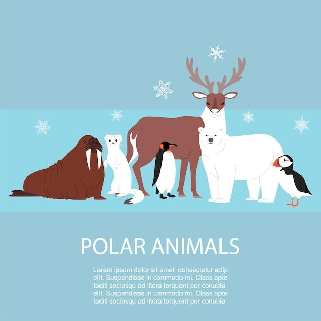Polar and arctic animals and birds illustration. Premium Vector