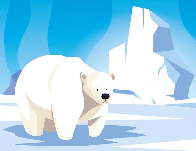 北極、北極の風景でホッキョクグマ Premiumベクター