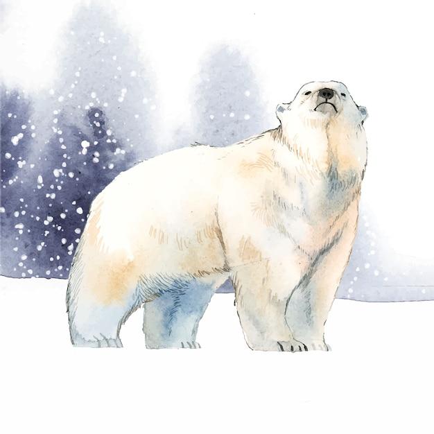 Polar bear Free Vector
