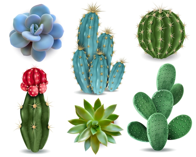 Popular indoor plants elements and succulents rosettes varieties including pin cushion cactus realistic collection isolated vector collection Free Vector