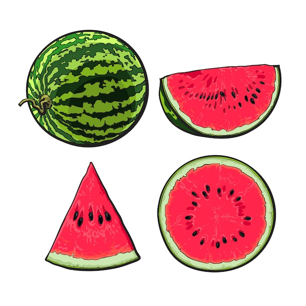 Portions of a watermelon illustration Premium Vector